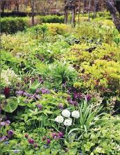 Trädgårdsliv nr 1, 2012