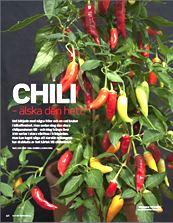 Chili uppslag I-s