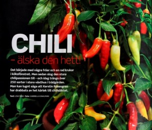 _DSC0697 chili uppslag, crop, fix - s crop II