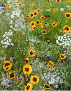 meadows hojdare