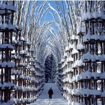 Arte Sella - Cattedrale Vegetale av Giuliano Mauri 2001,  Foto Aldo Fedele