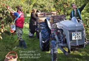 appel-musteri-crop