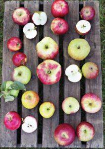 apple-musteri-ii