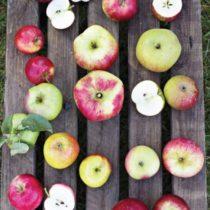 apple-iii